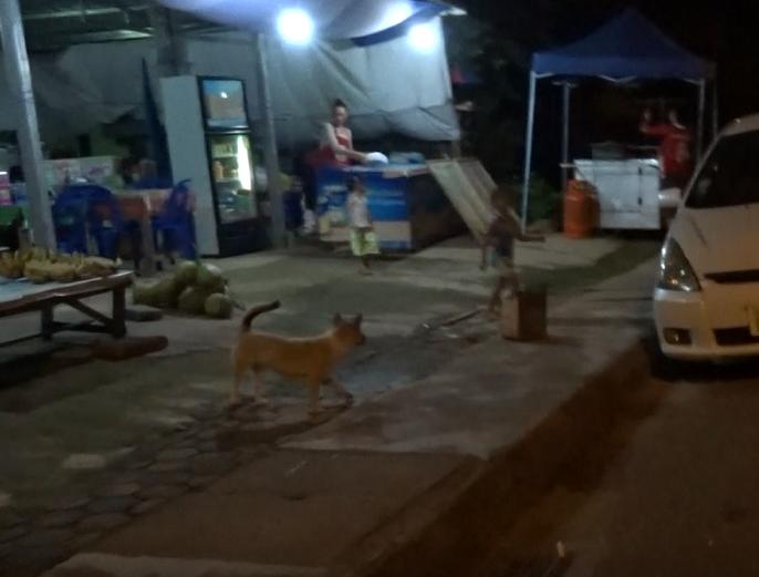 バンビエンの夜に注意すべき犬たち