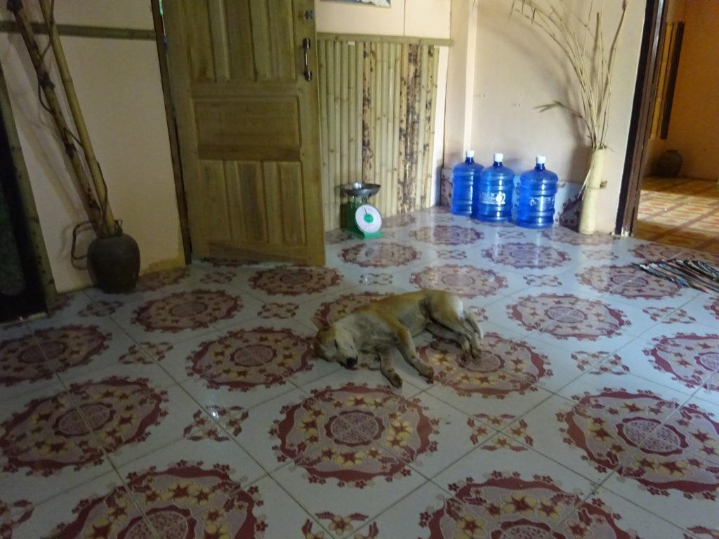 バンビエンのホステルの看板犬