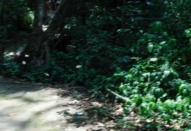 ラオス・ルアンパバーン「クアンシーの滝」の蝶々