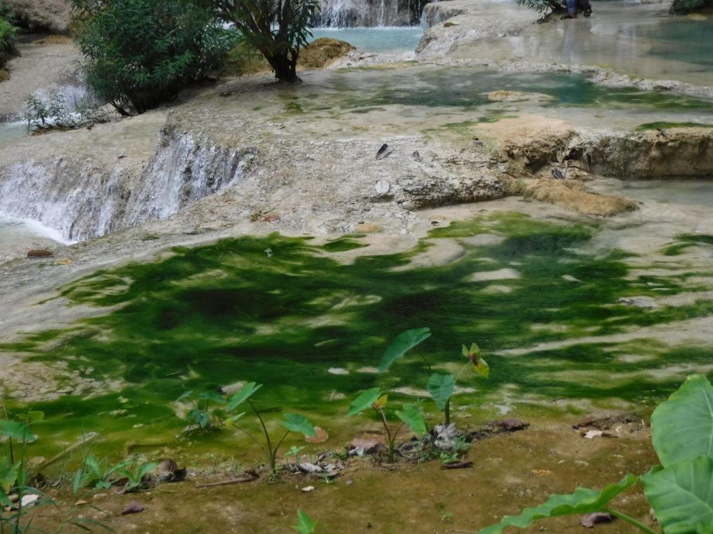 ラオス・ルアンパバーン「クアンシーの滝」のアオサ
