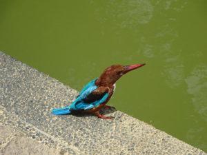 シンガポール植物園(ボタニック ガーデンズ)のキレイな鳥