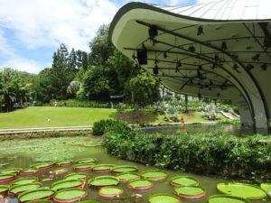 シンガポール植物園(ボタニック ガーデンズ)の広い池