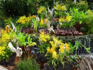 シンガポール国立洋ラン園(ナショナル オーキッド ガーデン)の様子