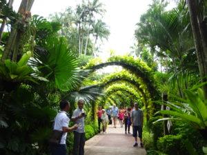 シンガポールの国立洋ラン園(ナショナル オーキッド ガーデン)の中の様子