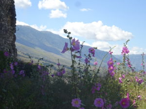 ジロカストラ城の壮大な自然に溶け合うタチアオイの花